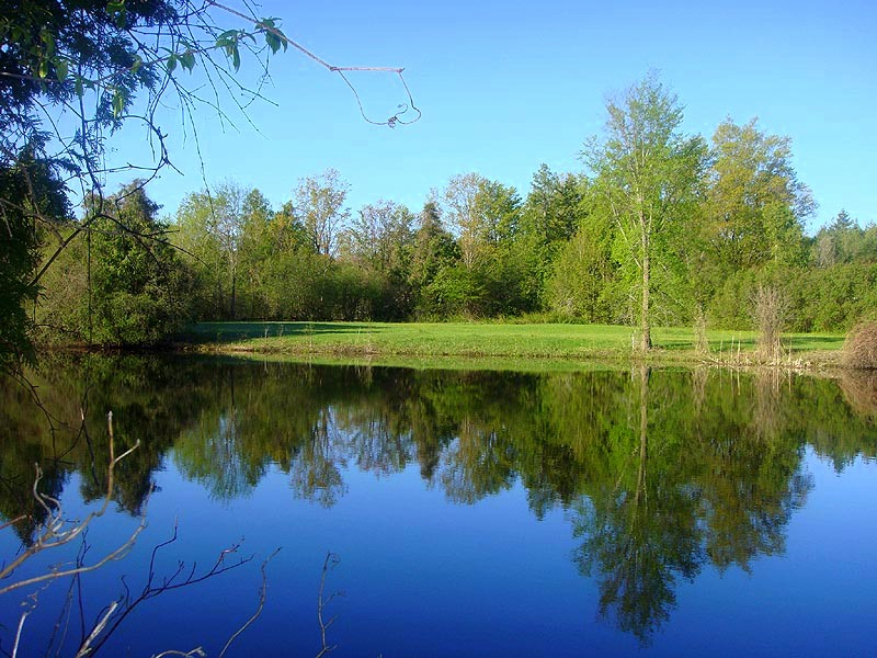 Farm 2009 - the pond