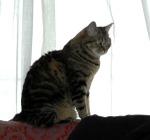 Olivia_2006
